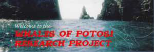 Whales of Potosi Research Project